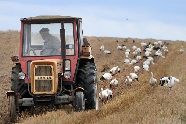 Traktor na Lubelszczyźnie, fot. Jan Kucharzyk /East News