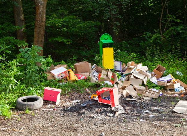 """Traktujemy lasy jak """"ziemię niczyją"""" /123RF/PICSEL"""