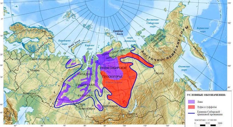 Trapy syberyjskie /Wikipedia