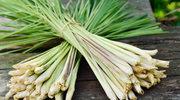 Trawa cytrynowa obniża gorączkę