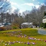 Trawnik kwiatowy - zakładanie i pielęgnacja