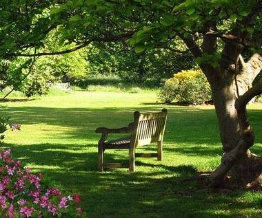Trawnik w cieniu drzew – zakładanie i pielęgnacja