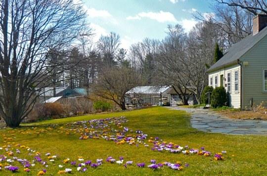 trawnik z kwiatami /© Photogenica
