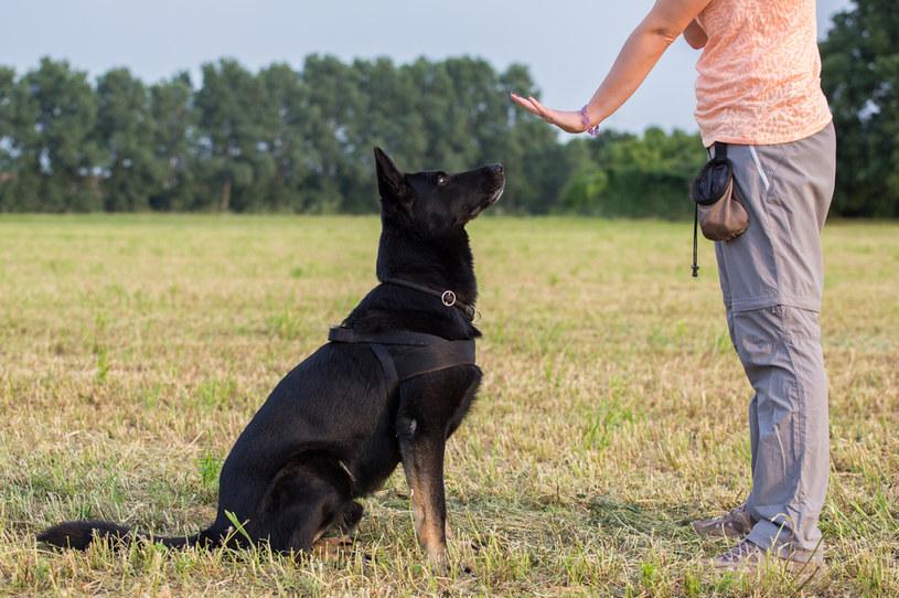 Tresura psa pomaga w dyscyplinowaniu zwierzaka właściwie w każdej sytuacji /123RF/PICSEL