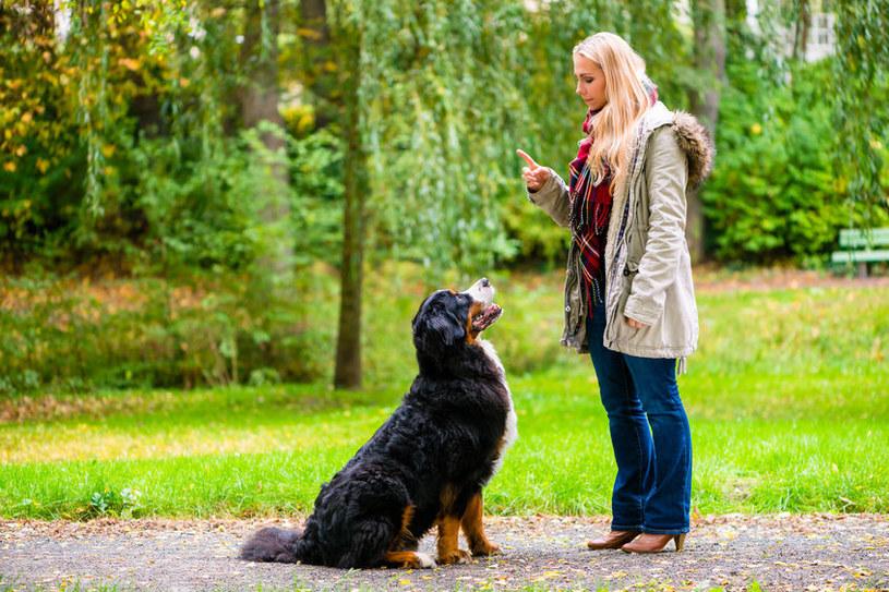 Tresura starszego psa /©123RF/PICSEL