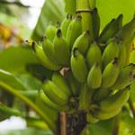 Triki z bananem, o których nie masz pojęcia!