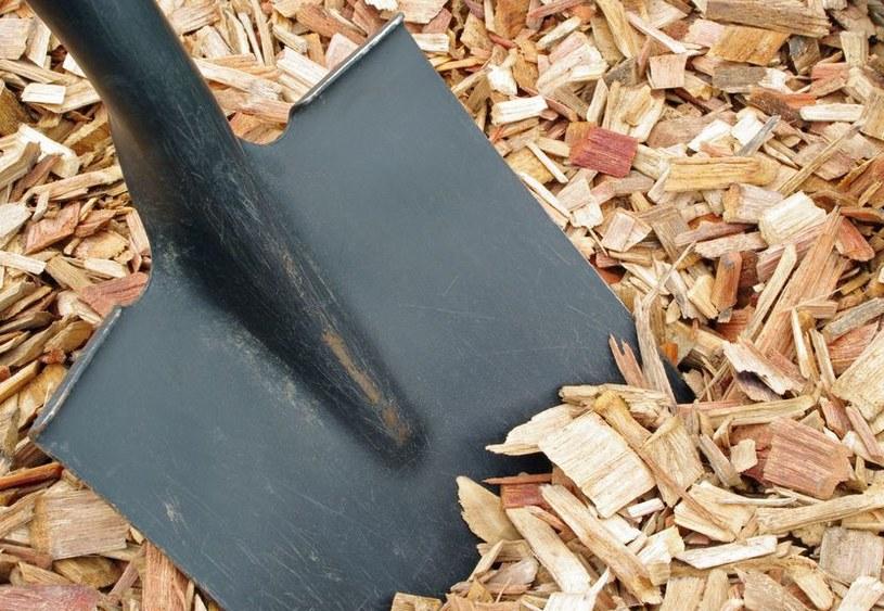 Trociny mogą być wykorzystane jako ściółka, ale pod jednym warunkiem /123RF/PICSEL