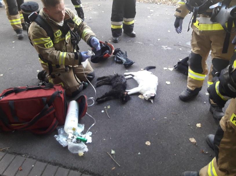 Trójmiejscy strażacy uratowali koty /Straż Pożarna /facebook.com