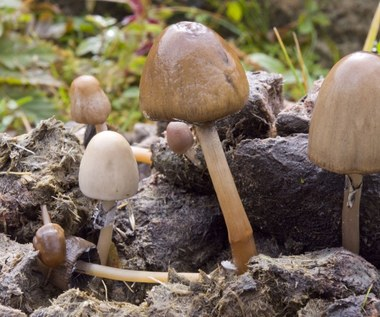 Trujące grzyby, czyli czego unikać w lesie