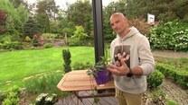 Trujące rośliny w ogrodzie – czego unikać?
