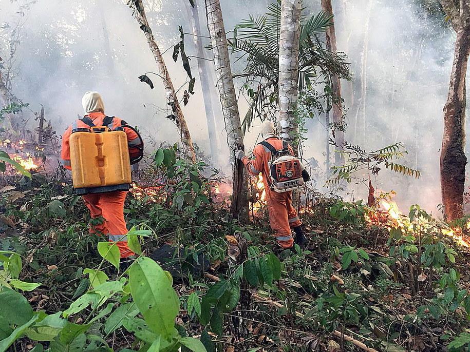 Trwa walka z pożarami lasów Amazonii /Porto Velho Firefighters HANDOUT  /PAP/EPA