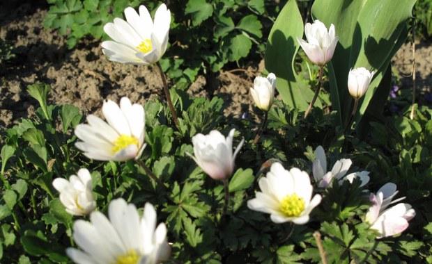 Trwa wielkie odliczanie do nadejścia wiosny