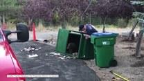 Trzy małe misie zatrzasnęły się w śmietniku. Z pomocą ruszyli strażacy