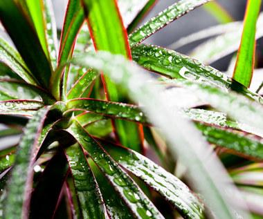 Trzy rośliny, które nie potrzebują dużo światła
