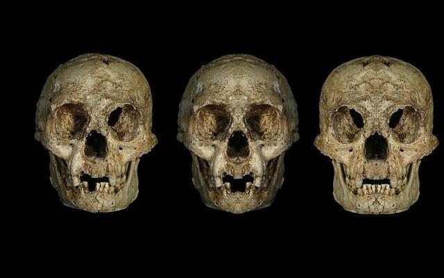 Trzy różne czaszki LB1 pokazujące asymetrię w ich budowie /materiały prasowe