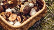 Trzy szybkie i proste dania z grzybami w roli głównej