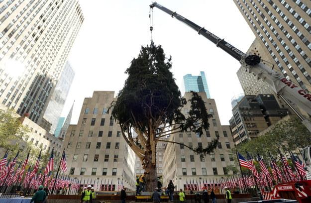 Trzynastotonowa choinka stanęła w Nowym Jorku