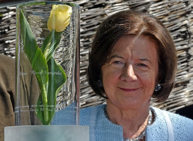 "Tulipany odmiany ""Maria Kaczyńska"" są żółto-kremowe /AFP"