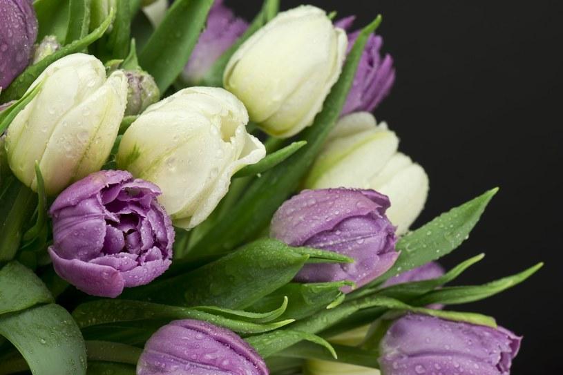 Tulipany w wazonie mogą przetrwać wiele dni /123RF/PICSEL