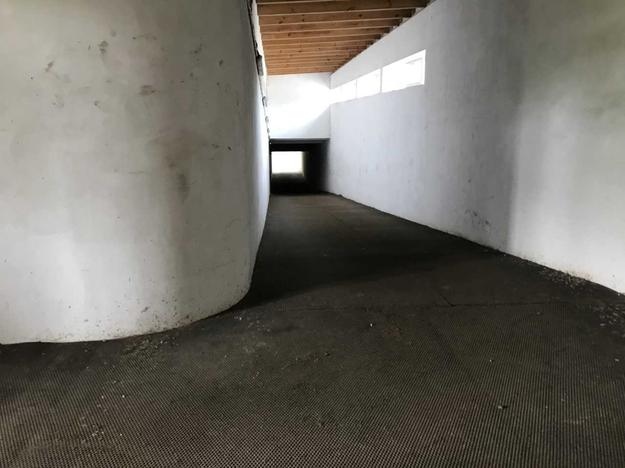 Tunel podziemny, którym konie wyścigowe przechodzą ze stajni na tor wyścigowy, żeby wziąć udział w gonitwie. /Fot. Michał Dobrołowicz /RMF FM