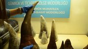 Turcja: Przechwycono rogi nosorożca o wartości ponad 2 milionów dolarów