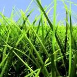 Turf Effect - zobacz nową technologię generowania trawy od Nvidii