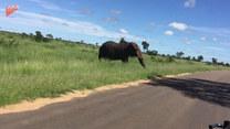 Turyści byli przerażeni. Na ich drodze stanął wkurzony słoń