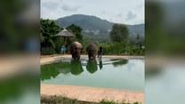 Turyści byli zaskoczeni. Dwa słonie skorzystały z hotelowego basenu