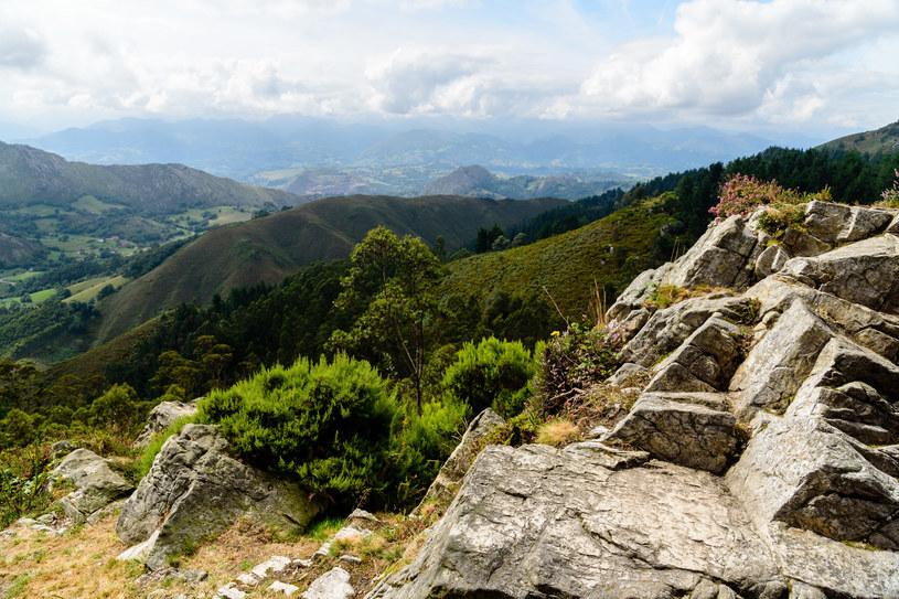 Turyści przyjeżdżają podglądać dziką naturę /123RF/PICSEL