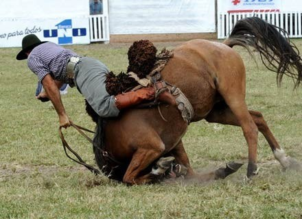 Tutaj kontakt z ziemią zalicza uczestnik rodeo w Urugwaju, marzec 2008 /AFP