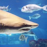 Twitter ostrzeże o ataku rekinów