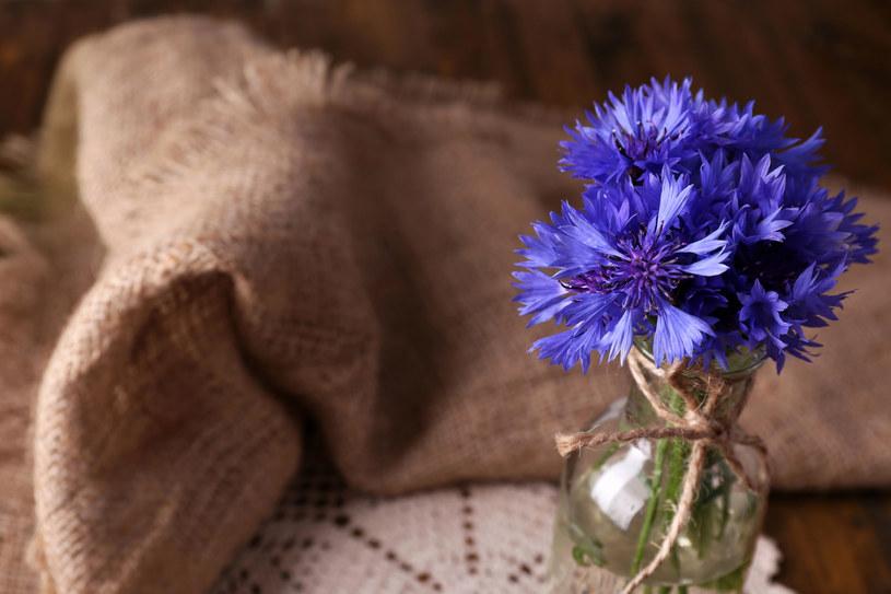 Twoim problemem są cienie pod oczami? Ta niepozorna roślina może ci pomóc /123RF/PICSEL