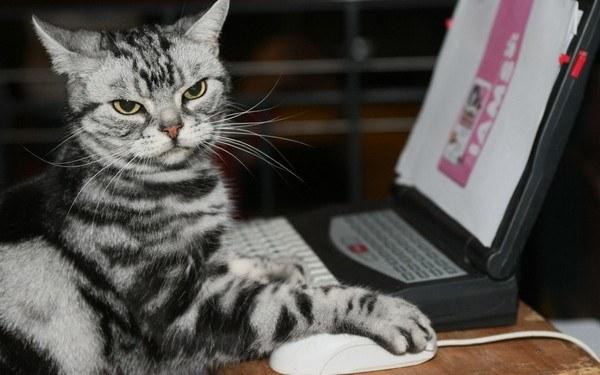 Twój kot także polecałby myszki komputerowe /AFP