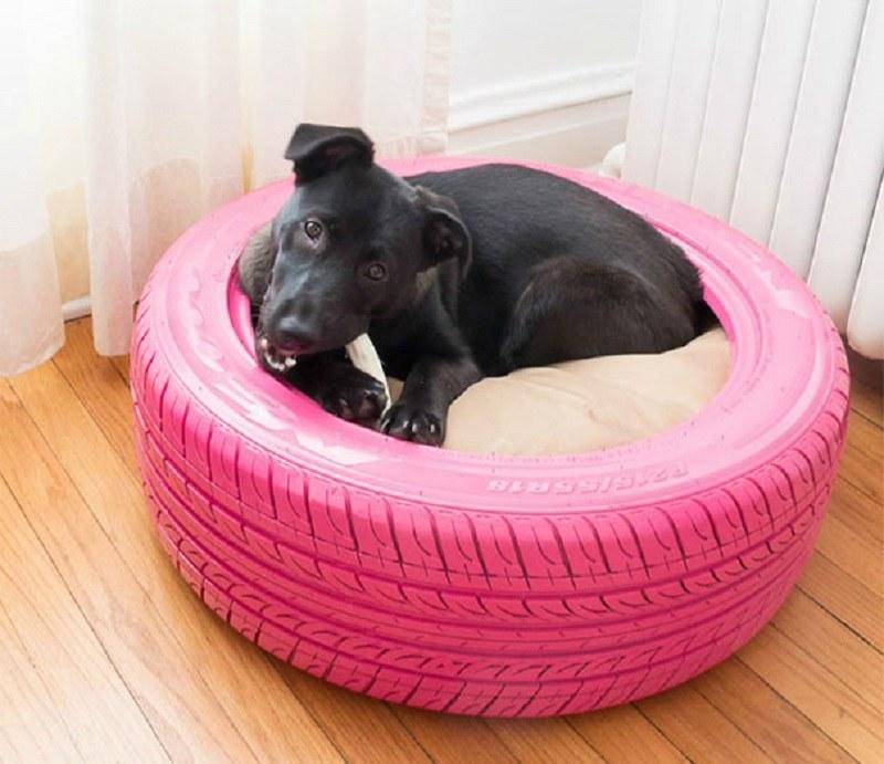 Twój pies wreszcie nie zje swojego łóżka /InnocentValley /imgur.com