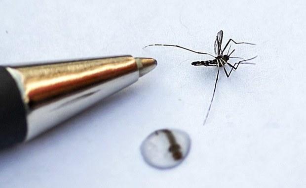 """""""Tygrys"""" kontra komary tygrysie. Francja, Niemcy i Szwajcaria jednoczą siły"""