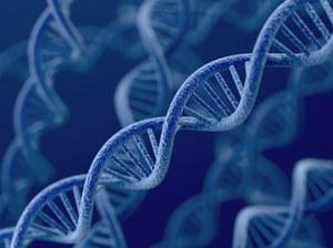 Tylko 8 proc. genomu jest nam naprawdę potrzebne?