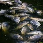 Tysiące śniętych ryb na torze wioślarskim