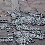 Tysiące zniszczonych nowych samochodów