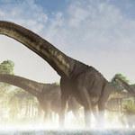Tytanozaur: Największe stworzenie, jakie chodziło po Ziemi