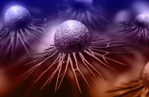 U podstaw nowej metody walki z rakiem stoi krzew Chachacoma /123RF/PICSEL