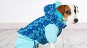 Ubranka dla psów – fanaberia czy konieczność?