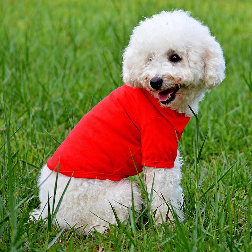 ubranka dla psów /© Photogenica