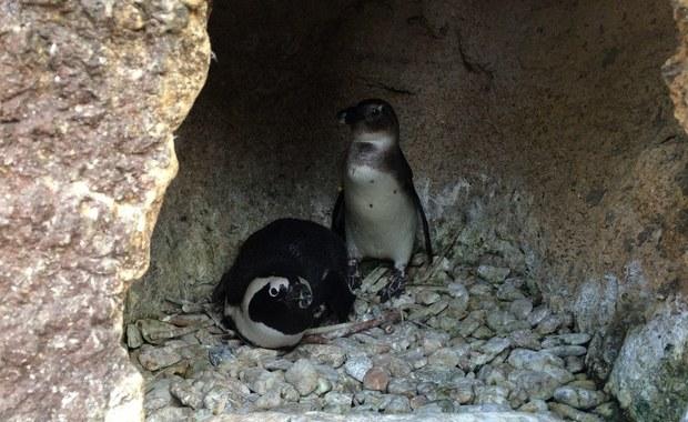 Uchatkowe SPA i pingwiny w Bronxie, czyli zakamarki Afrykarium we wrocławskim zoo