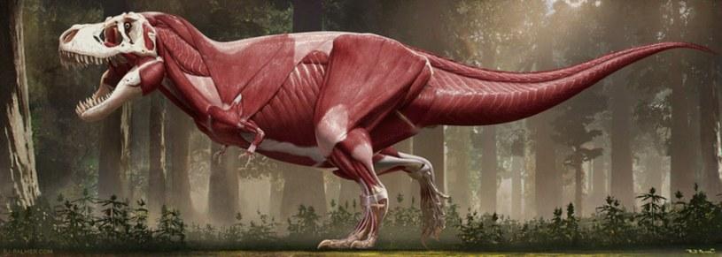 Udało się stworzyć model tyranozaura dokładny jak nigdy wcześniej /materiały prasowe