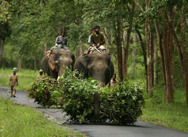 Udomowione słonie to w południowych Indiach widok normalny  /AFP