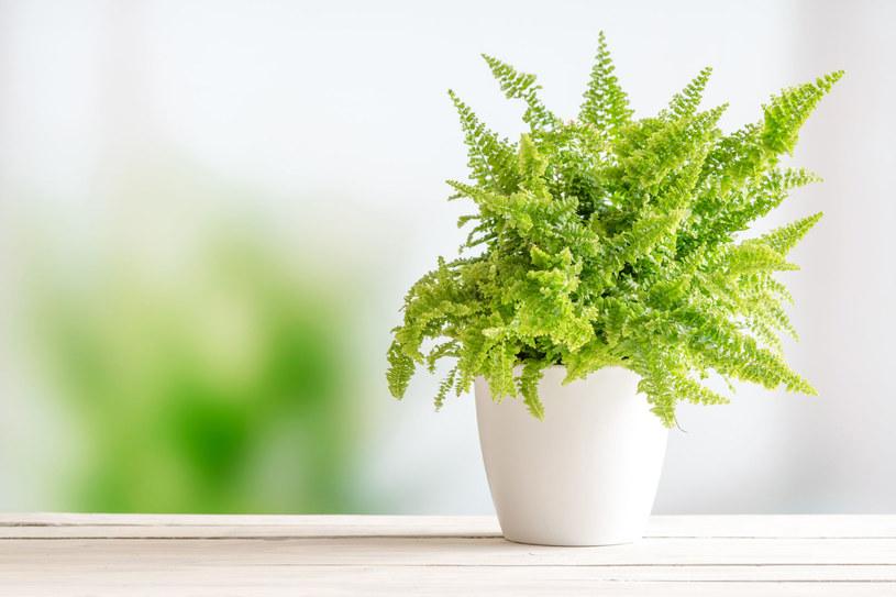 Udowodniono, że rośliny działają jak naturalne filtry /123RF/PICSEL