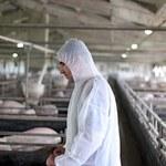 UE: Trwa interwencyjny skup tuczników