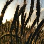 UE wspiera Ukrainę kosztem polskiego rolnictwa. Przepadły postulaty Warszawy