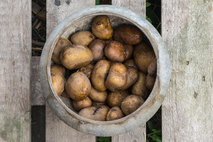 Ugotuj ziemniaki w łupinach, roztłucz. Gorącą masę przełóż do długiego, szerokiego woreczka. Dotknij policzka, aby sprawdzić, czy nie parzy. Owiń bark ręcznikiem, przyłóż woreczek, przykryj drugim ręcznikiem /123RF/PICSEL