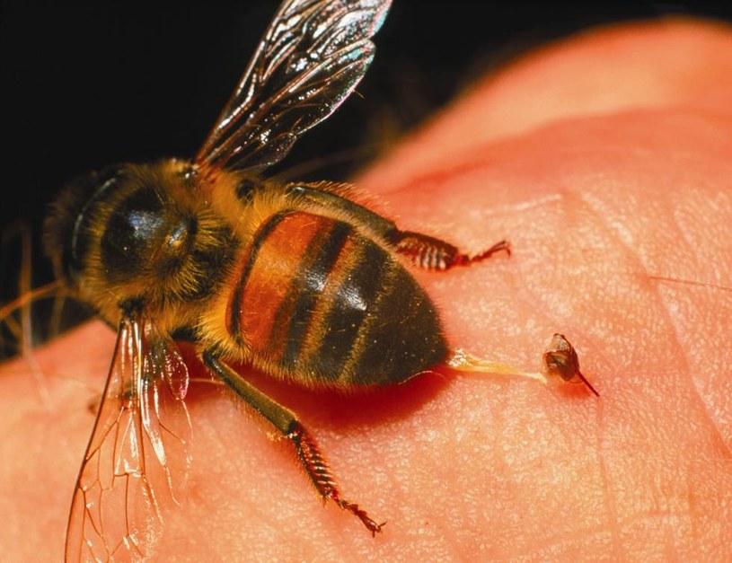 ukaszenie pszczoły /© Photogenica